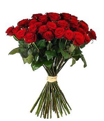 Picture of Strong and gorgeous red icelandic roses grown in the harsh icelandic climate.