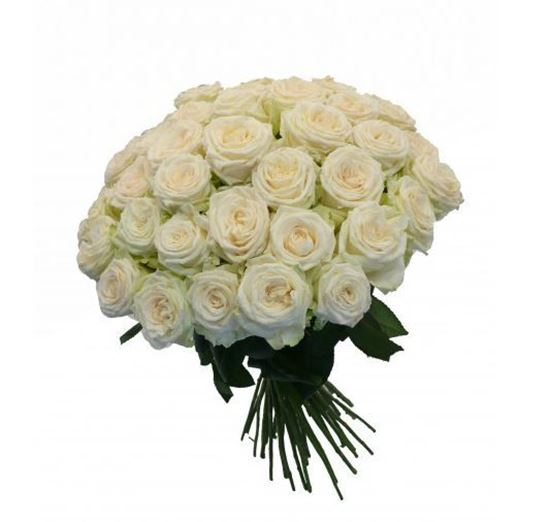 Picture of Strong long stemmed white icelandic roses grown in the harsh icelandic climate.