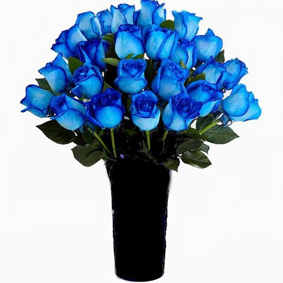 Picture of Strong and gorgeous icelandic blue coloured long stemmed roses .