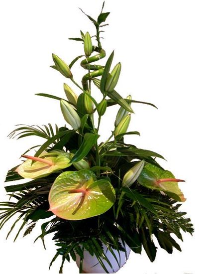 Picture of Tropical  Green  Anthuria and white oriental lily flower arrangement in a white vase