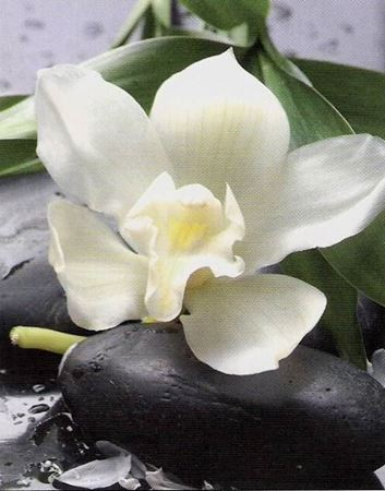 Picture for category White flowers
