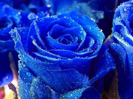 Picture for category Blue flowers