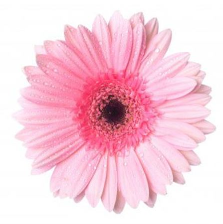 Picture for category Pink flowers