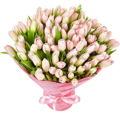 Picture of Beautiful strong Icelandic Tulips in pink colours  in simple hand tied bouquet.