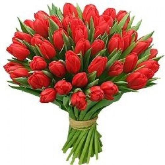 Picture of Beautiful strong Icelandic Tulips in red colours in simple hand tied bouquet.