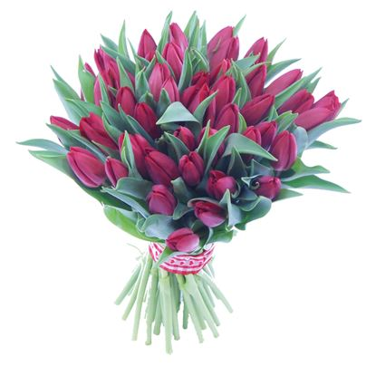 Picture of Beautiful strong Icelandic Tulips in purple colours in simple hand tied bouquet.