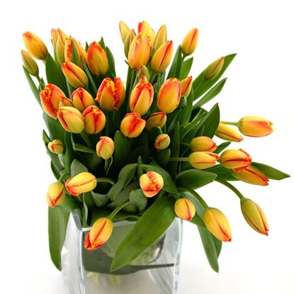 Picture of Beautiful strong Icelandic Tulips in orange colours in simple hand tied bouquet.
