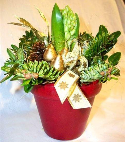 Mynd Hyacinthuskreytingar í potti