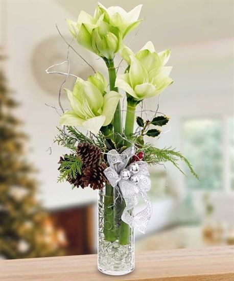 Picture of Very festive flower bouquet with white or red amaryllis flower